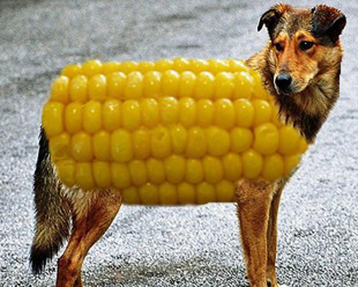 http://www.gosiameyerjewelry.com/wp-content/uploads/2015/10/corn-dog1.jpg