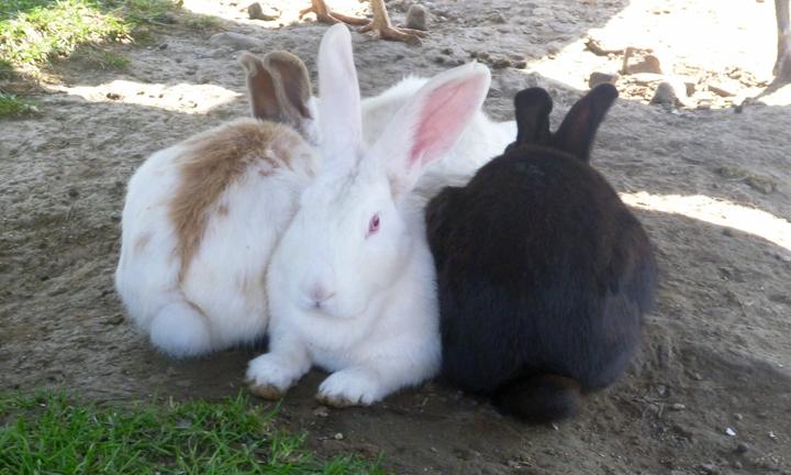 rubbits