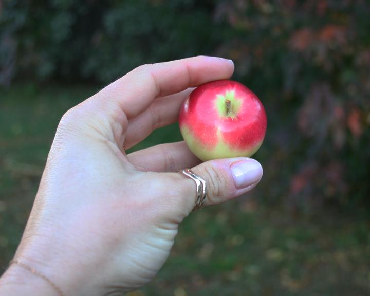 mini apple
