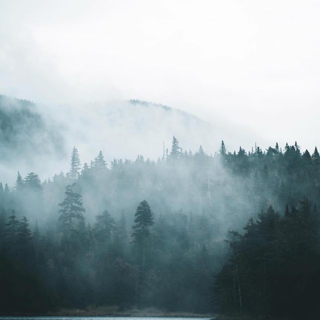 Finding some serious inspiration on this foggy VT morning hellip